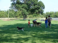 People walk dogs around open field in the dogpark